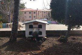 Ermenek Belediyesi Sokak Hayvanları İçin Barınaklar Yaptı