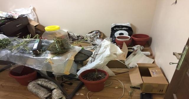 Operasyon Yapılan Evden Uyuşturucu Bahçesi Çıktı