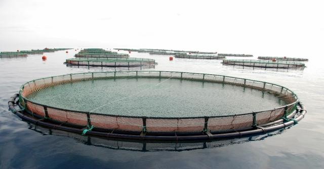 Mersinde 60In Üzerinde Balık Çiftliği Kurulacak