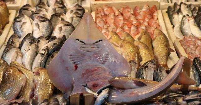 Bu Balığı Gören Şaşırıp Kalıyor