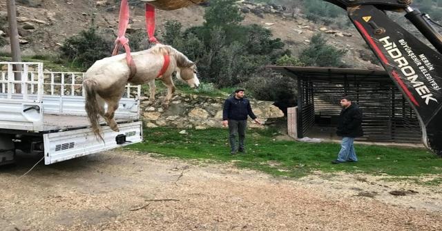 Dereye Düşen Sahipsiz Atı İtfaiye Kurtardı