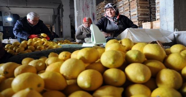 Limon Değerleneceği Güne Kadar Yatağa Giriyor