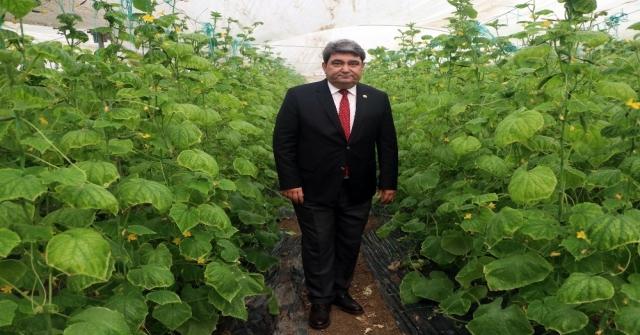 Zam Şampiyonu Salatalık Mersinde 1 Lira İstanbulda 8 Lira