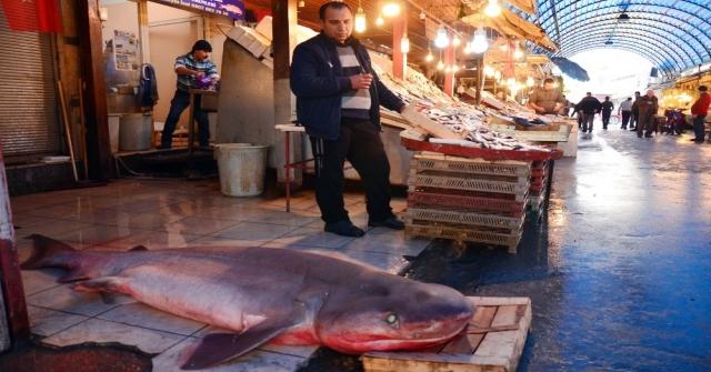 Mersinde Dev Köpek Balığı, Balıkçıların Ağına Takıldı