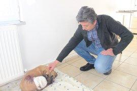 Yavru köpekler ölmekten son anda kurtarıldı