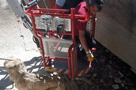 Karaman'da kanala düşen köpeği itfaiye kurtardı