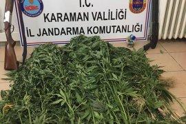 Karaman'da jandarmadan iki eve kenevir operasyonu