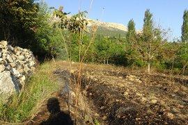 Ot Yangını Meyve Ağaçlarına Zarar Verdi