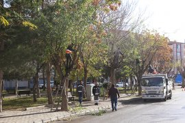Belediye Ekiplerince Ağaçlar Budanıyor