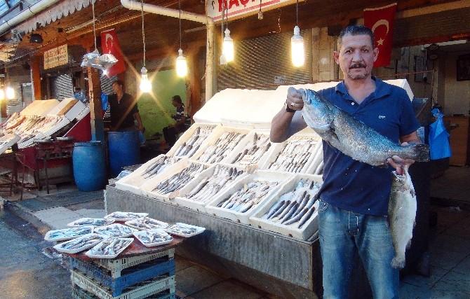 (Özel Haber) Mersin'de Balıkçılar 15 Eylül'de 'Vira Bismillah' Diyecek