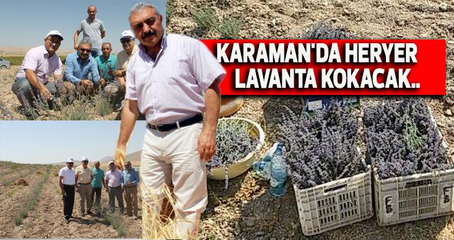 KARAMAN'DA HERYER LAVANTA KOKACAK