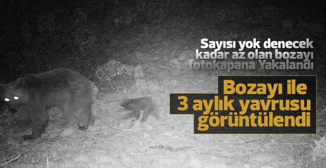 Karaman'da bozayı ile 3 aylık yavrusunu fotokapan görüntüledi