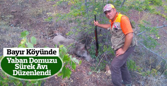 Bayır Köyünde Yaban Domuzu Sürek Avı Düzenlendi