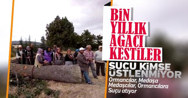 Karaman'da Bin yıllık tarihi ağacı kestiler.