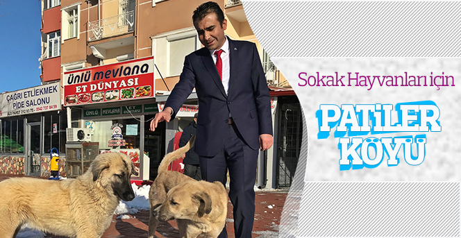 """Kalaycı: """"Sokak Hayvanları için"""
