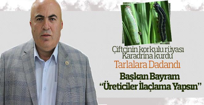 Karaman'da Karadrina kurdu alarmı