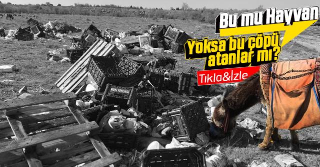 Boş tarlaya atılan çöp yığınları vatandaşı çileden çıkardı.