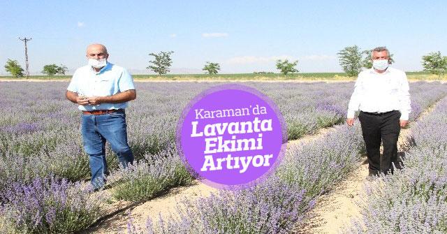 Karaman'da lavanta ekimi artıyor