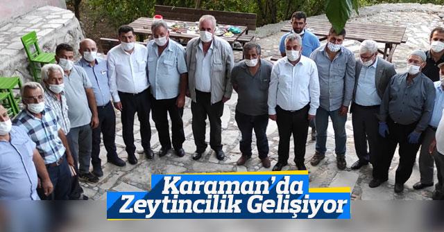 Karaman'da Zeytincilik Gelişiyor ve Değerleniyor