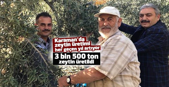 Karaman'da zeytin üretimi her geçen yıl artıyor
