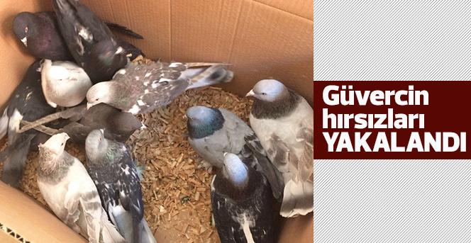 Güvercin Hırsızları Yakalandı