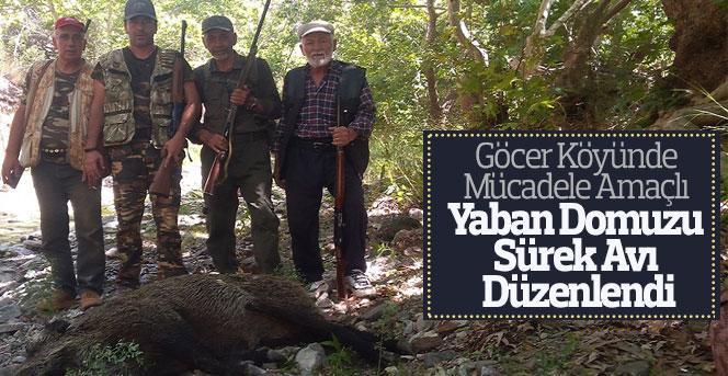 Göcer Köyünde Yaban Domuzu Sürek Avı Düzenlendi