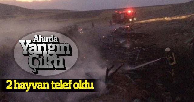 Karaman'da yanan ahırdaki 2 hayvan telef oldu