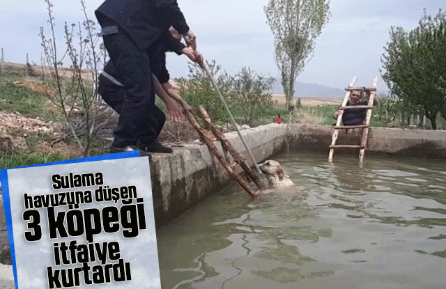Sulama havuzuna düşen 3 köpeği itfaiye kurtardı